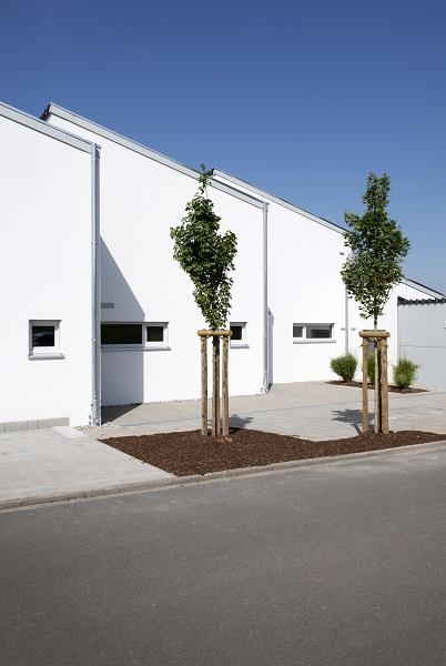 Eingangsbereich mit Baumbepflanzung