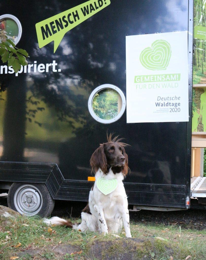 Hund vor Ausstellungs-Mobil